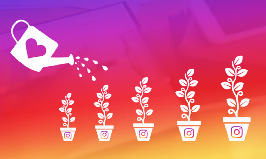 organic instagram growth services